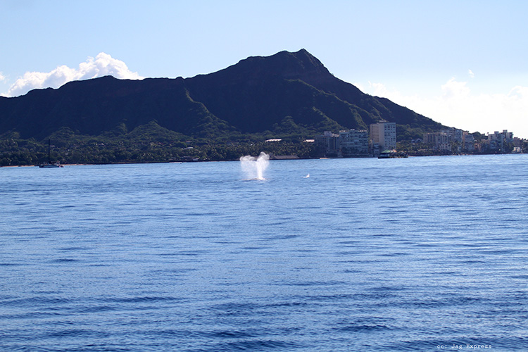 Whale Breach near Diamond Head