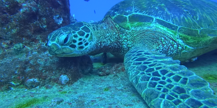 The Insider's Guide To Snorkeling In Hawaii